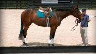 Equestrian Coach Your Online Equestrian Video